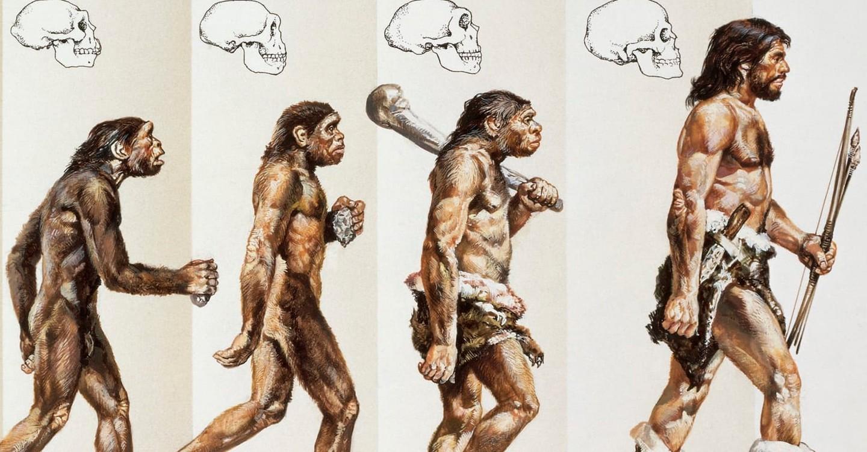 L'Histoire Secrète de notre Évolution