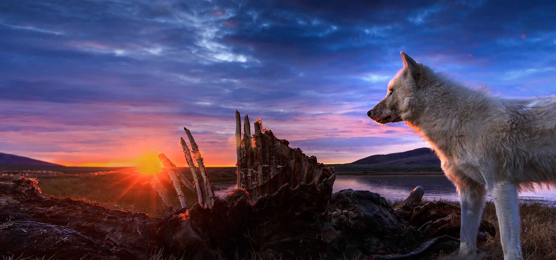 El reino del lobo blanco