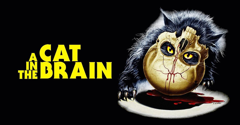 Un gatto nel cervello