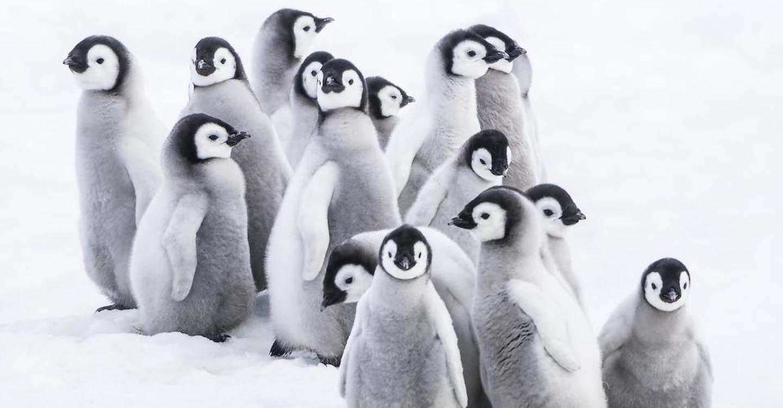 Die Reise der Pinguine 2: Der Weg des Lebens