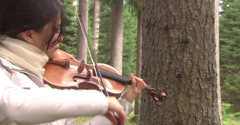 Stradivarius: Mysteries Of The Supreme Violin