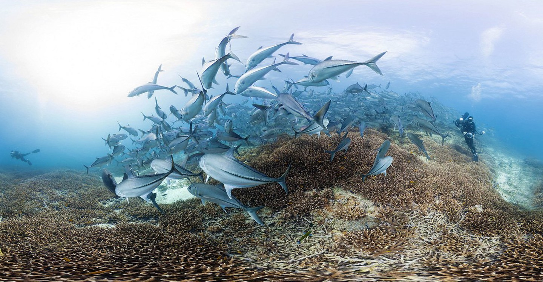 Chasing Coral backdrop 1