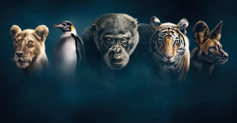 Wilde Dynastien: Die Clans der Tiere