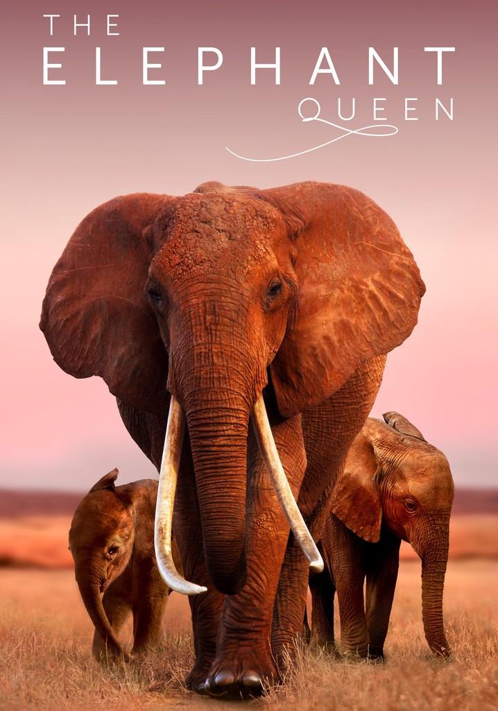 A Rainha Elefante