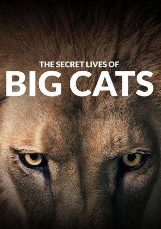 The Secret Lives Of Big Cats