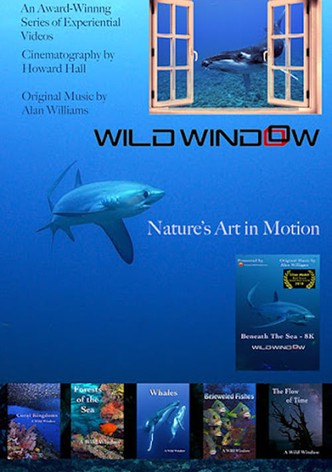 Wild Window