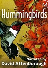 Hummingbirds: Jewelled Messengers