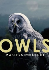 Owls: Masters of the Night